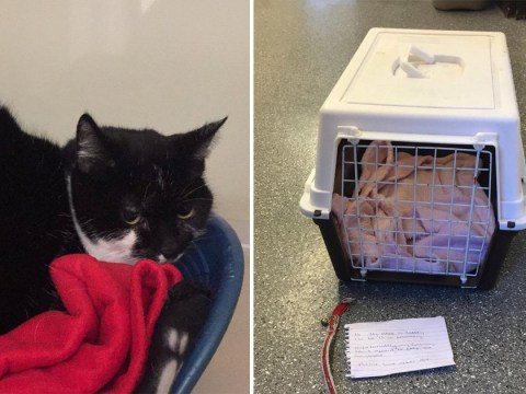 Cat abandoned with heartbreaking note saying owners 'can't afford' him anymore