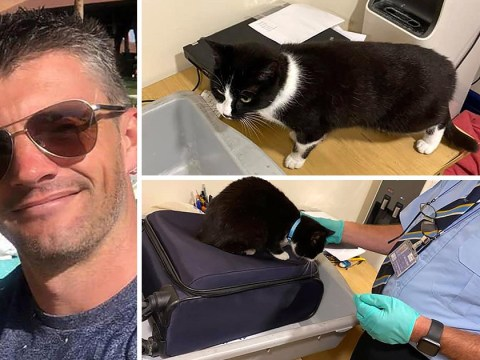 Couple stopped at airport security after cat sneaked into their luggage