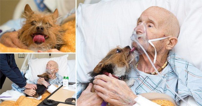 John Vincent was reunited with his dog for a final time (Picture: Albuquerque Animal Welfare)