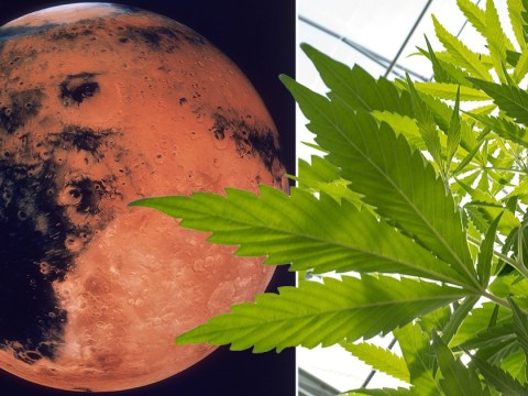 Nasa could grow tomatoes on Mars and it means weed farming may also be possible