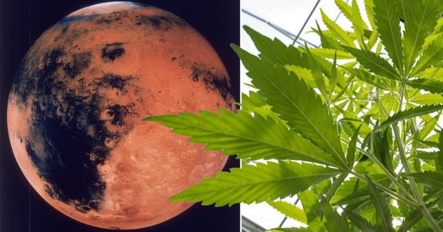 You've heard of the Red Planet - but will it soon be known as the Green Planet too?