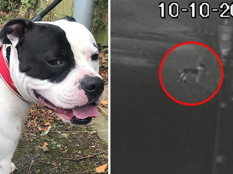 CCTV captures moment man tied up dog and abandoned him