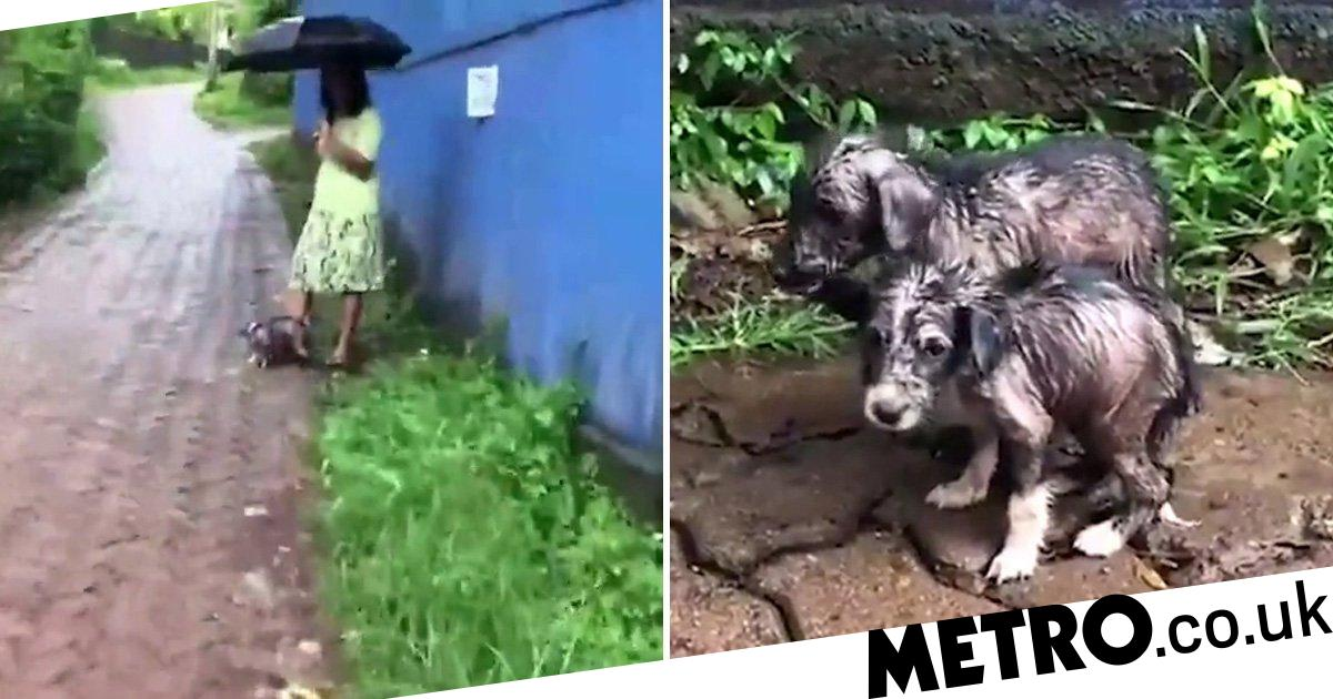 Hero woman holds umbrella over puppies dumped outside animal shelter