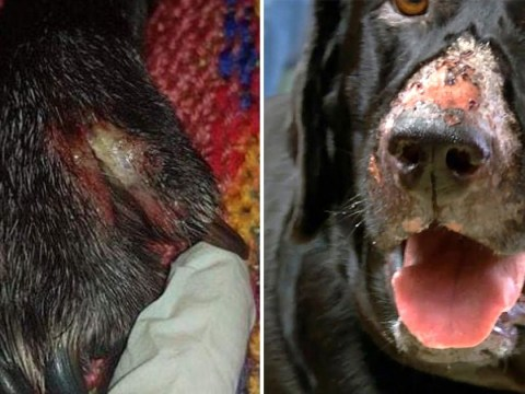 New cases of deadly Alabama Rot which eats flesh of dogs found in UK
