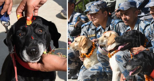 Dogs in Nepal during Diwali