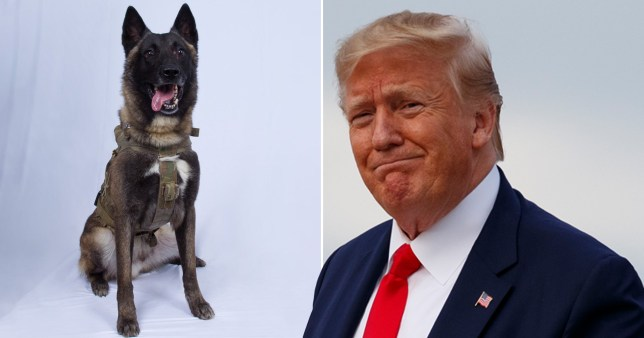 Pictured: The 'wonderful' dog who did a 'great job' in killing al-Baghdadi