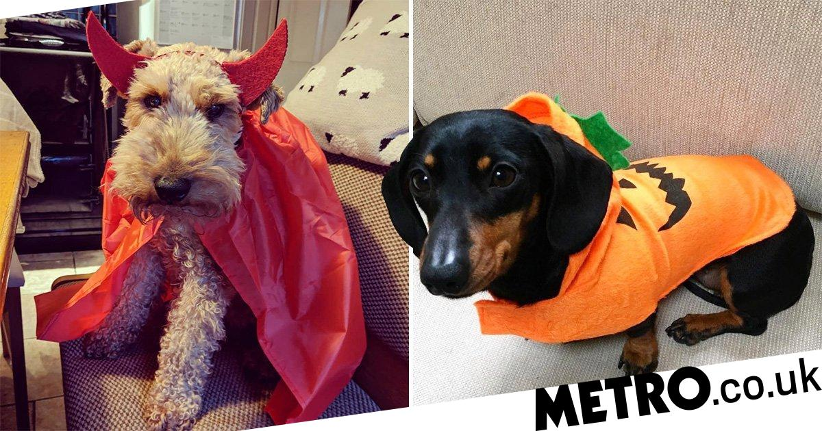 The cutest dog Halloween costumes this year