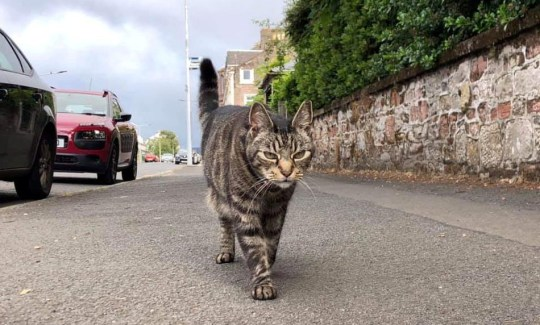 The Traveling Cat of Scotland