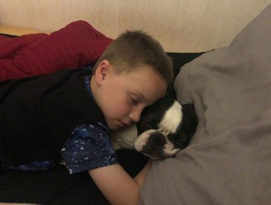 Boston Terrier Ralph was stolen from his owner's work van on Fairfield Avenue in Bredbury on October 9