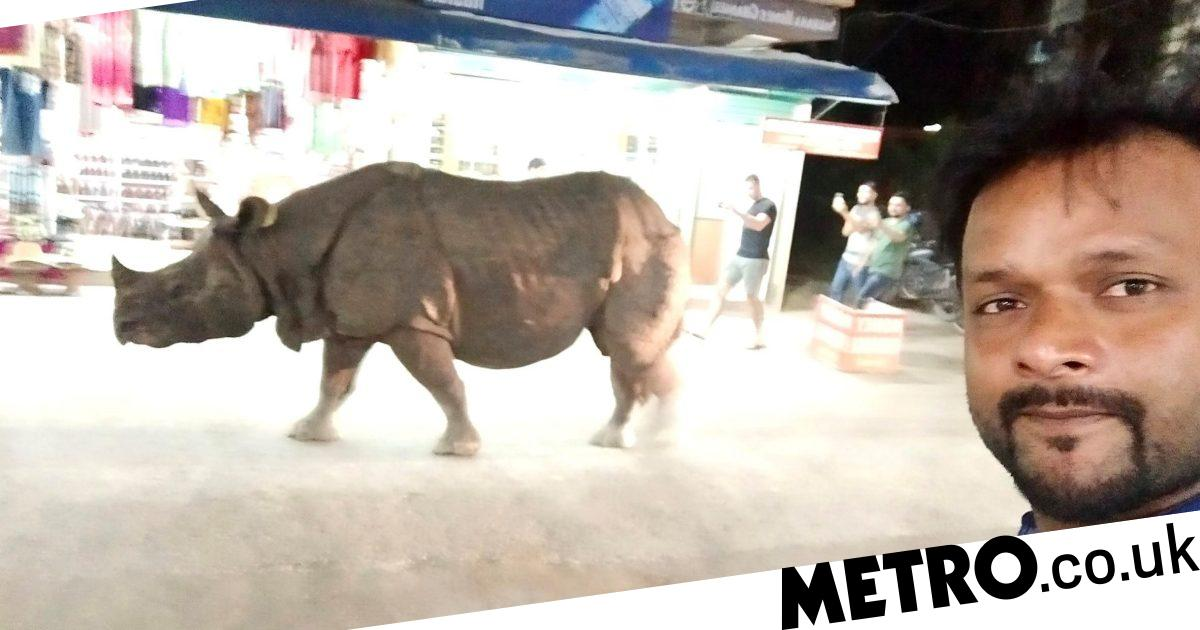 Rhino casually strolls down road in Nepal allowing tourists to take selfies