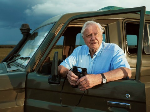 David Attenborough finds youths' obsession with him 'odd' and we love him for it