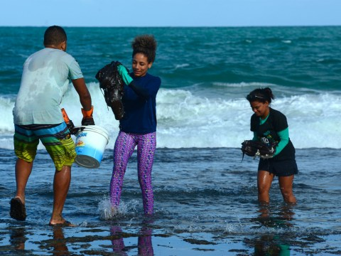 Thousands of volunteers help to clean mysterious oil spill in Brazil