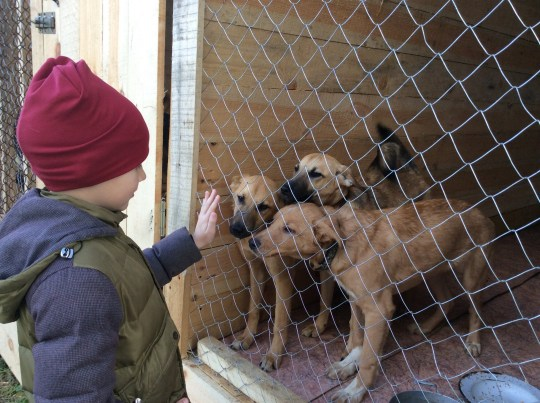 Pavel Abramov at the dog shelter
