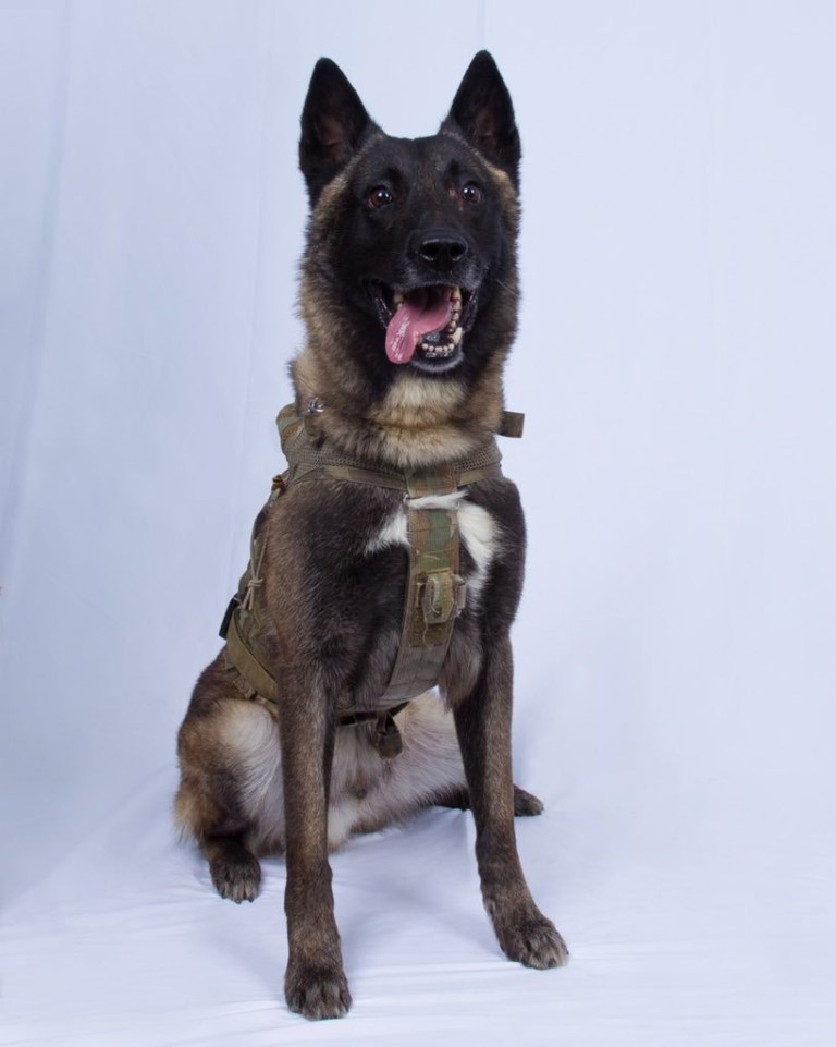 We have declassified a picture of the wonderful dog (name not declassified) that did such a GREAT JOB in capturing and killing the Leader of ISIS, Abu Bakr al-Baghdadi! Donald Trump Tweet