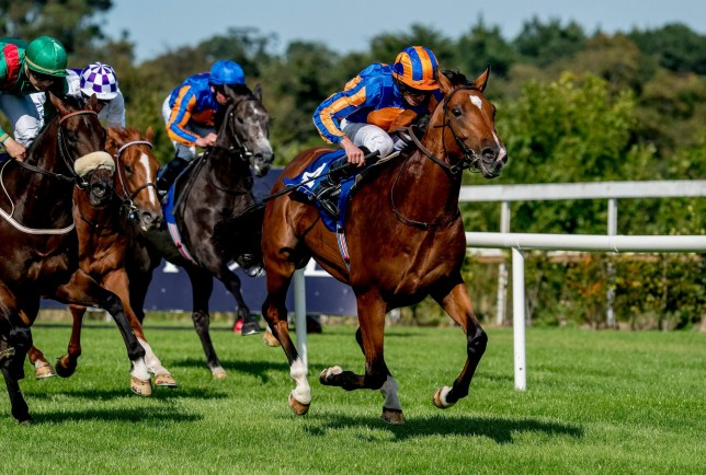 Horse racing is suspended