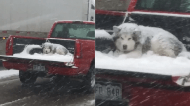 Grab of dog in back of pickup truck next to same photo zoomed in close on the dog