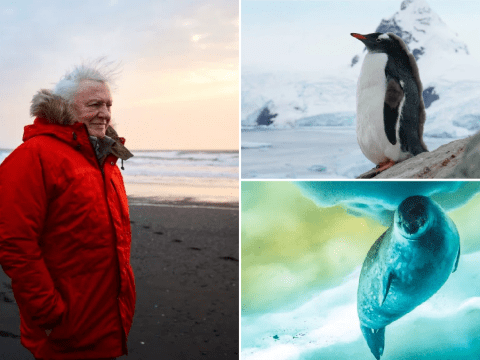 Seven Worlds, One Planet – Antarctica review: Breathtaking visuals is Attenborough at his finest