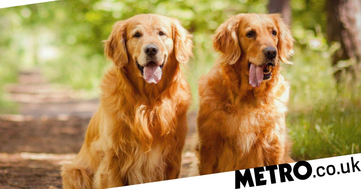 You can now get paid £30,000 to look after two dogs in a mansion