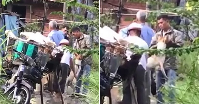 Shocking video shows the brutal reality of Vietnam's dog trade