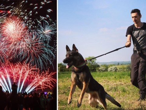 How to train your dog to cope with fireworks