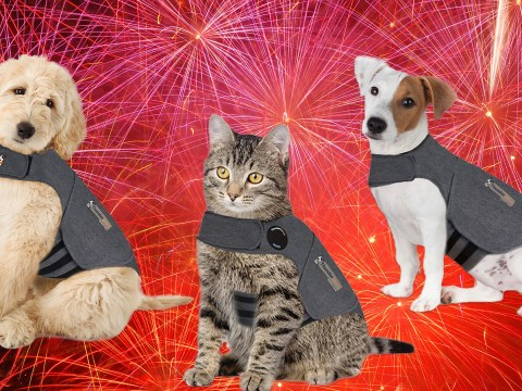 Pets at Home is selling jackets that help to keep dogs and cats calm during fireworks