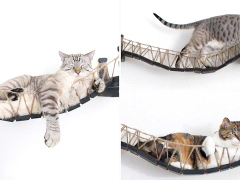 Pet owners can't get enough of this £140 cat bridge