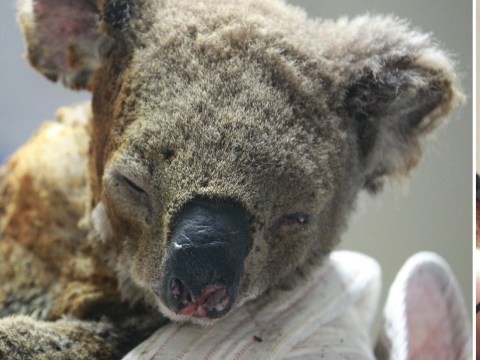 Hero dog saves injured koalas from Australian bushfires