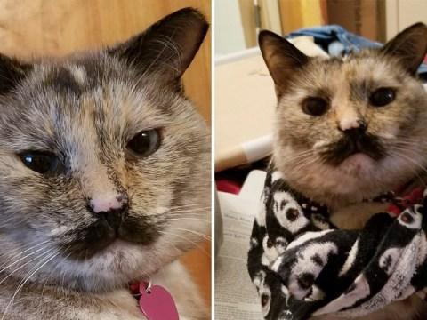 Meet Charlie, your new favourite cat with a Chaplin-esque moustache