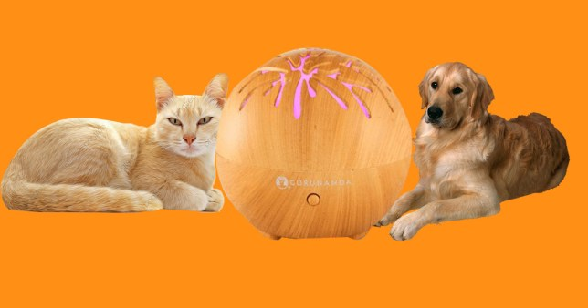 Your essential oil diffuser could be poisoning your cat or dog