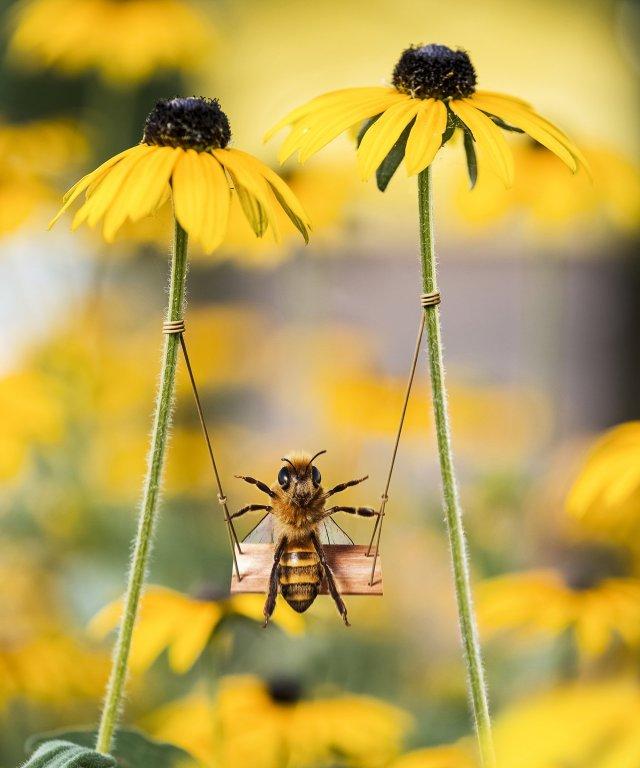 A bee swinging