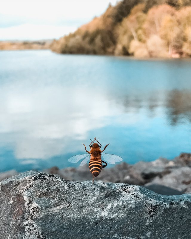 Picture of the bee