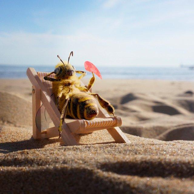 A bee sunbathing