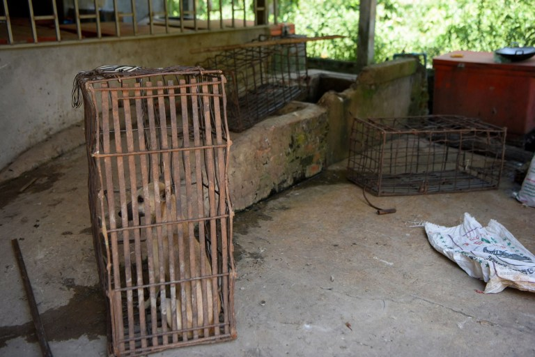 This photo taken on October 26, 2019 shows a dog in a cage next to a pit for drowning dogs at a slaughterhouse in Kampong Cham province. - Cambodian dog meat traders drown, strangle and stab thousands of canines a day in a shadowy but sprawling business that traumatises workers and exposes them to deadly health risks like rabies. (Photo by TANG CHHIN Sothy / AFP) / TO GO WITH Cambodia-animal-dog-food, FEATURE by Joe FREEMAN and Suy SE (Photo by TANG CHHIN SOTHY/AFP via Getty Images)