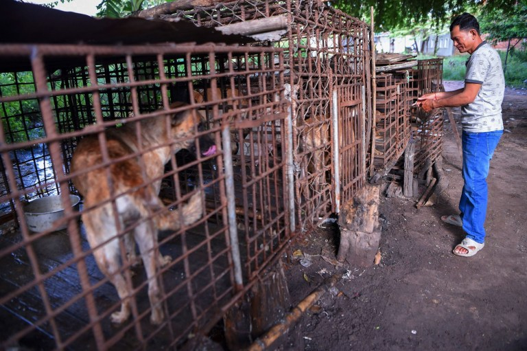 This photo taken on October 25, 2019 shows a man locking a cage full of dogs at a slaughterhouse in Siem Reap province. - Cambodian dog meat traders drown, strangle and stab thousands of canines a day in a shadowy but sprawling business that traumatises workers and exposes them to deadly health risks like rabies. (Photo by TANG CHHIN Sothy / AFP) / TO GO WITH Cambodia-animal-dog-food, FEATURE by Joe FREEMAN and Suy SE (Photo by TANG CHHIN SOTHY/AFP via Getty Images)