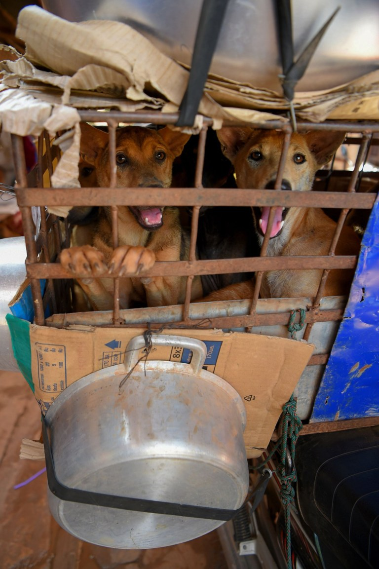 This photo taken on October 25, 2019 shows dogs looking out from a cage which covered with pans in Siem Reap province. - Cambodian dog meat traders drown, strangle and stab thousands of canines a day in a shadowy but sprawling business that traumatises workers and exposes them to deadly health risks like rabies. (Photo by TANG CHHIN Sothy / AFP) / TO GO WITH Cambodia-animal-dog-food, FEATURE by Joe FREEMAN and Suy SE (Photo by TANG CHHIN SOTHY/AFP via Getty Images)