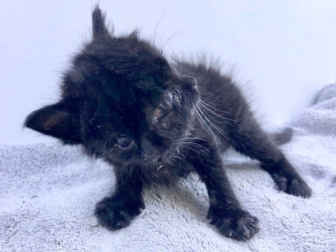 Rare kitten born with 'two faces' is named Duo and eats with both mouths
