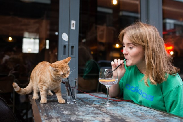 Molly Bradshaw, 22, enjoys a drink out with Eli the cat in Brewdog bar in Liverpool