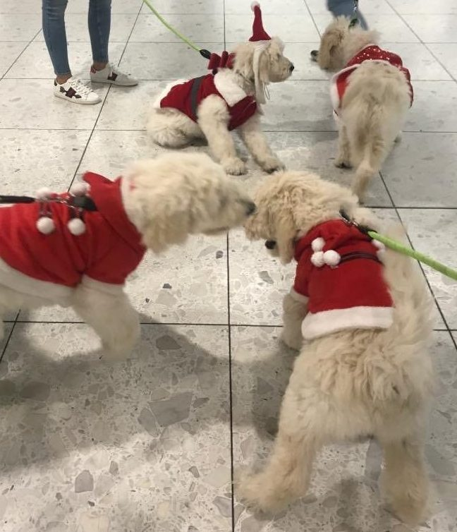 Dogs in training https://twitter.com/DublinAirport/status/1197114302878175233 Picture: Dublin Airport
