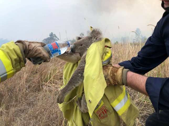 Fire and Rescue NSW team give water to a koala as they rescue it from fire in Jacky Bulbin Flat, New South Wales, Australia November 21, 2019 in this picture obtained from social media. Picture taken November 21, 2019. PAUL SUDMALS/via REUTERS THIS IMAGE HAS BEEN SUPPLIED BY A THIRD PARTY. MANDATORY CREDIT. NO RESALES. NO ARCHIVES.