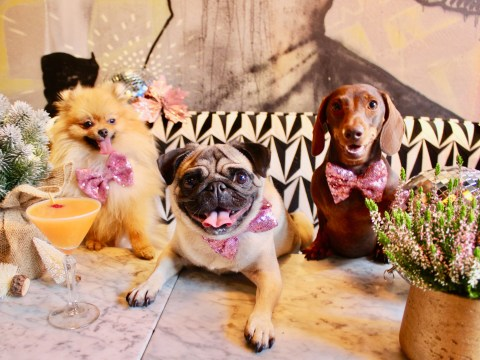 Dog lovers rejoice, there's a Christmas party for pooches coming your way next month