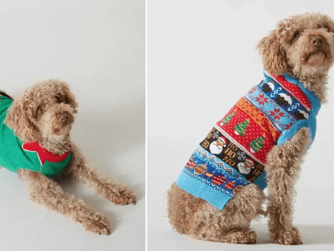 Sainsbury's launches adorable collection of Christmas jumpers for dogs