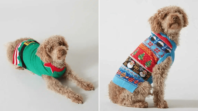 A split image of a dog wearing two different Christmas jumpers from the Sainsbury's TU collection
