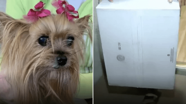 Photo of Cooper the dog next to photo of box that struck her