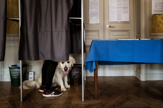 A person votes with her dog in a polling booth.