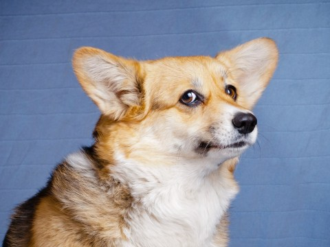Your dog can figure out if you're lying about how many treats you have