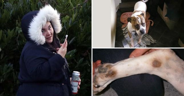 rebecca mckinnon dog beer