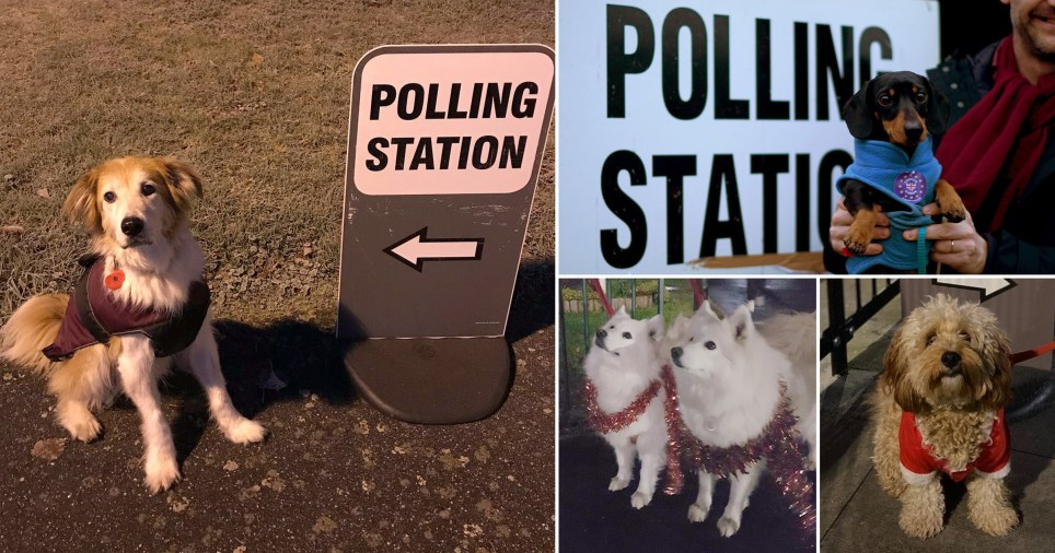 Very good dogs could influence the outcome of this election