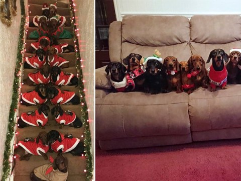 Man lines up his 17 sausage dogs – wearing festive outfits – for the perfect Christmas photo