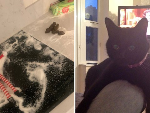 Kids wake up to find a giant poo after cat mistakes Elf on the Shelf setup for litter