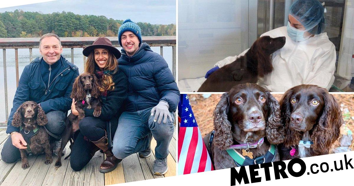 Dog with cancer makes miracle recovery after £39k stem cell transplant
